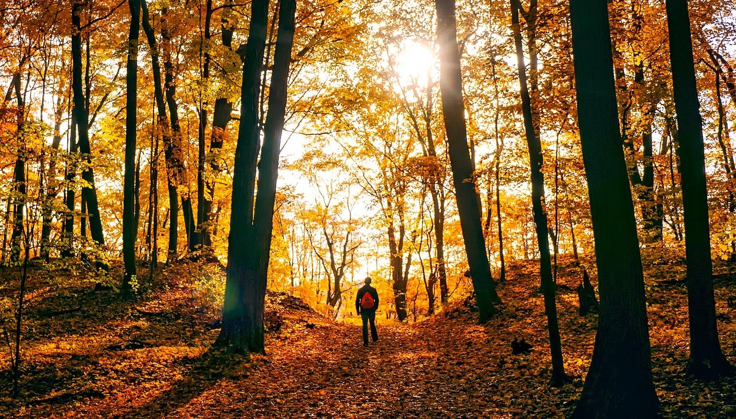 Durch den bunten Wald wandern