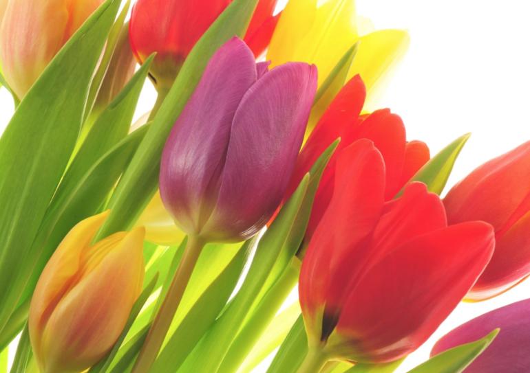 Tulpen-Einladung
