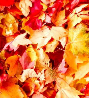 Einladung zum Herbstfest