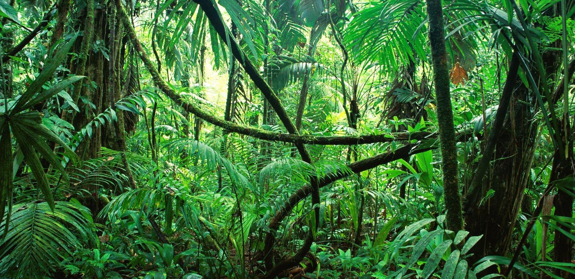 Einladung zur Dschungelparty